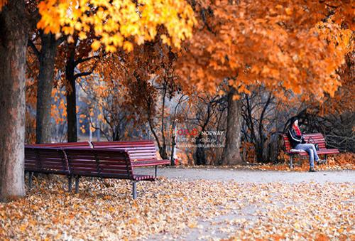秋季 寒冷